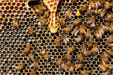 Deux bonnes raisons de consommer le miel de Paris